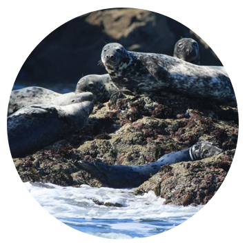 Swim with Seals